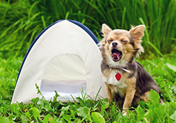 Camping acceptant les chiens